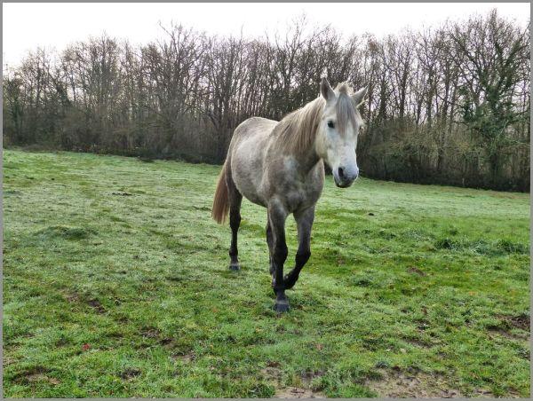 Au pré en hiver, un cheval bien seul