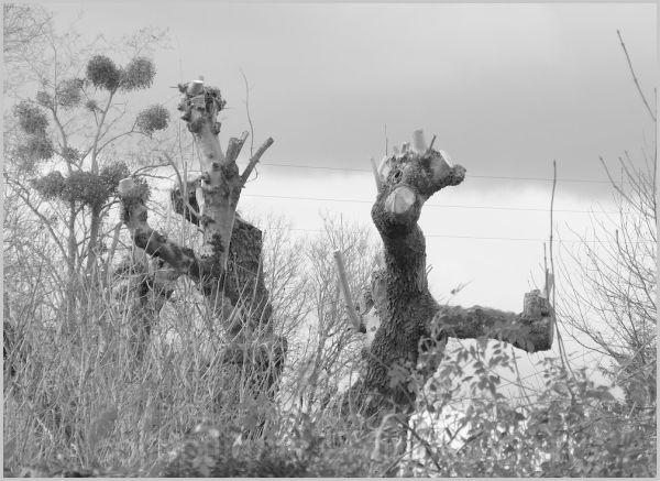 Des arbres musiciens