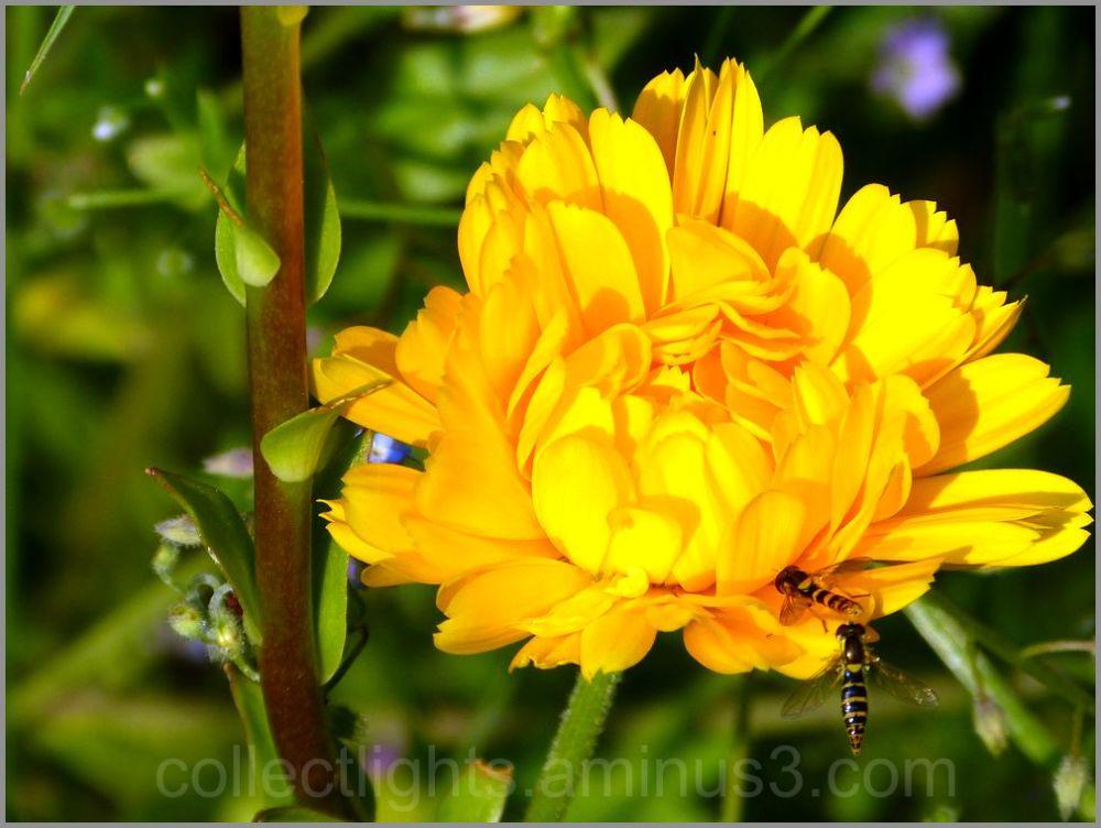 Les visiteurs des fleurs 36