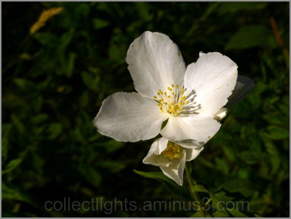 Parfum de fleur blanche