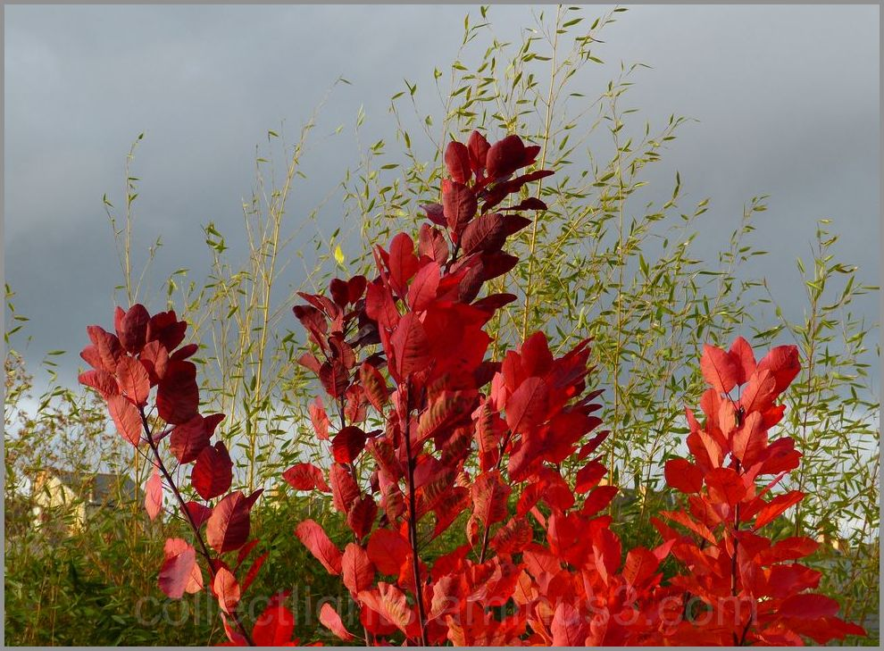 Automne rouge !