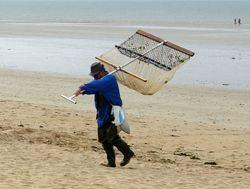 Au retour de la pêche à pied ! 3