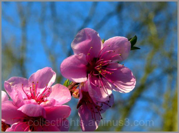 Sous le soleil d'avril