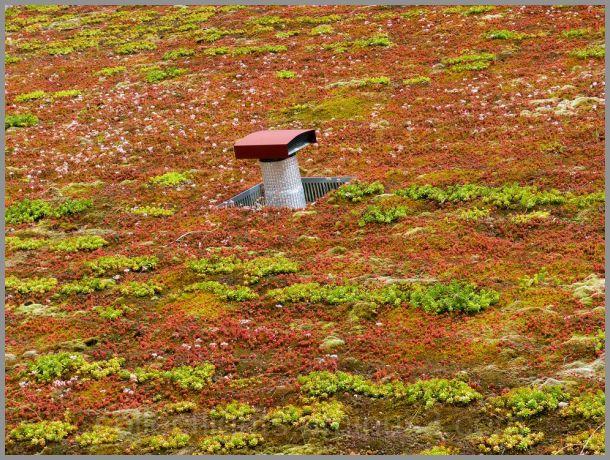 Camouflage végétal