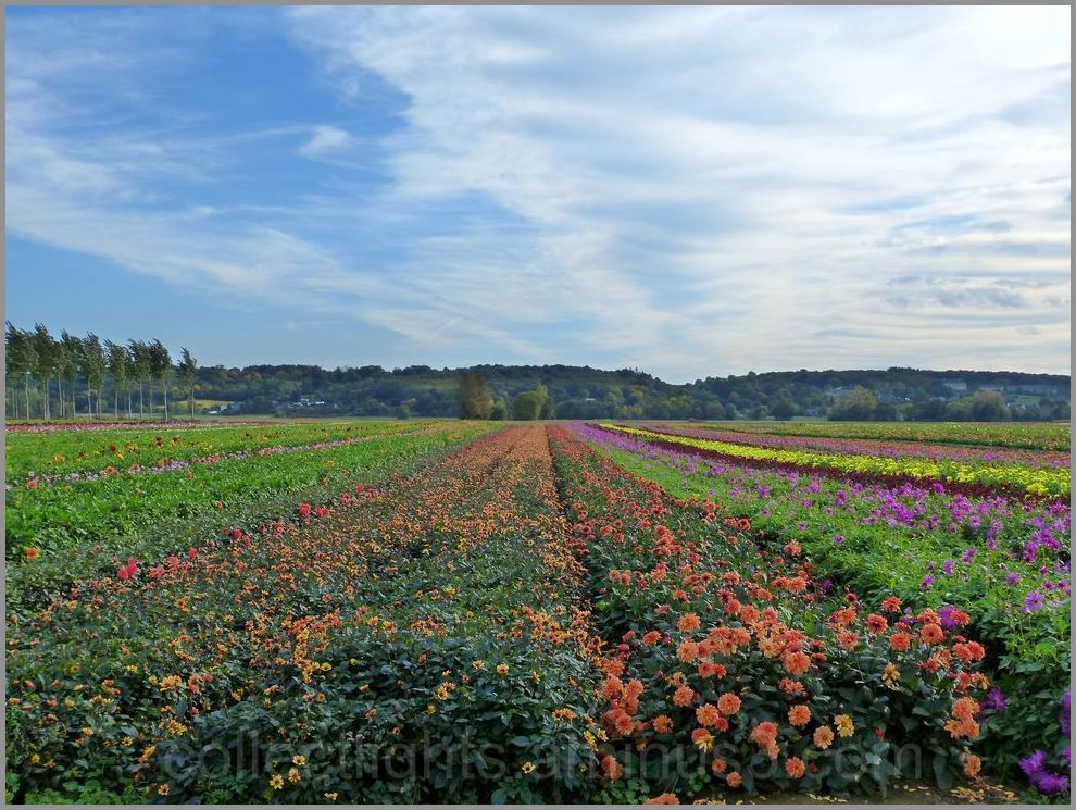 Campagne fleurie