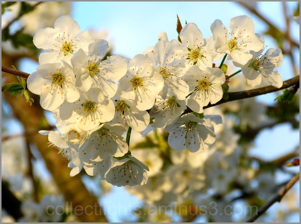 Si le printemps tient ses promesses...