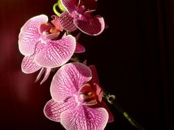 Orchidées d'été en beauté !