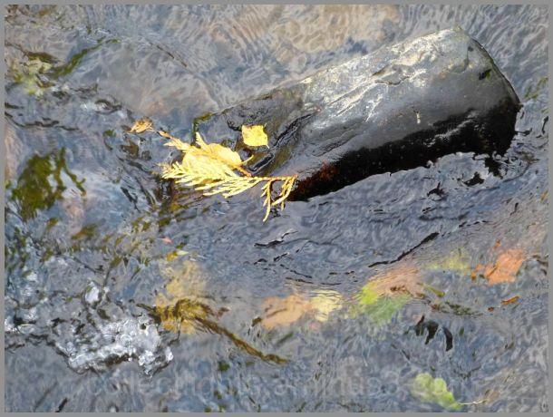 L'automne au fil de l'eau