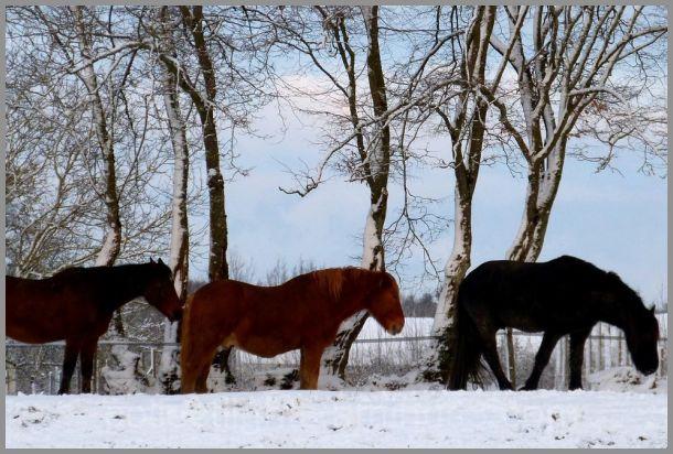 Au champ sous la neige