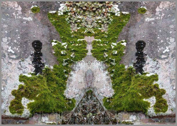 Mousses et lichens jouent un face à face