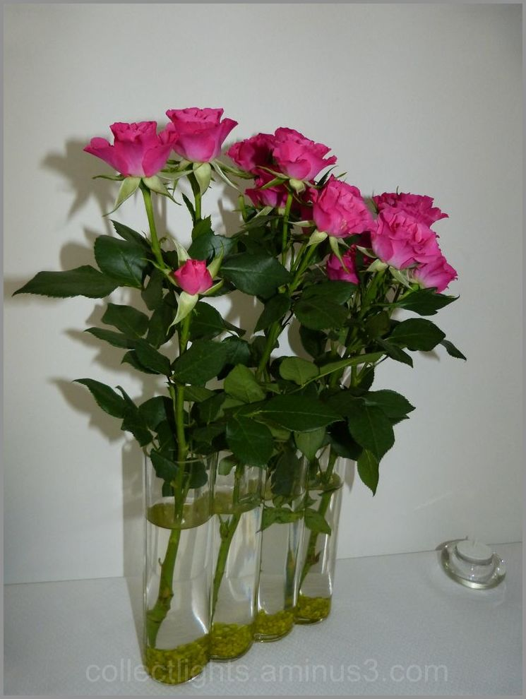 Quelques roses ...