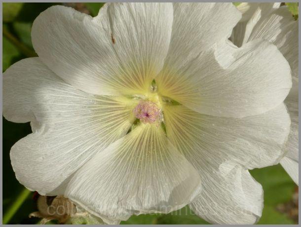 Une beauté au jardin