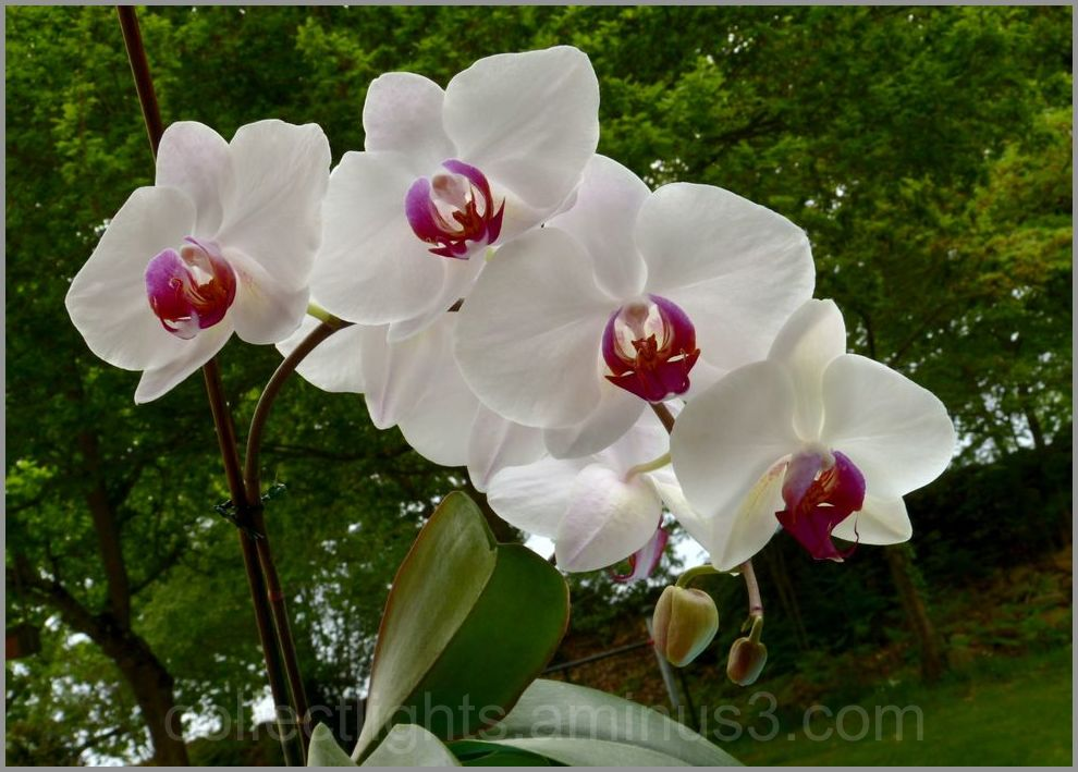Tellement belles ces orchidées !