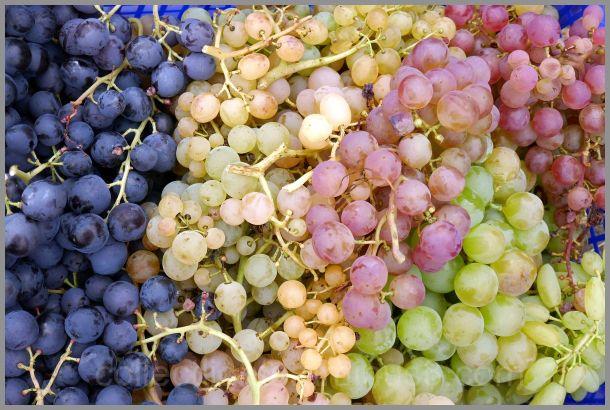 Dégustation de raisin