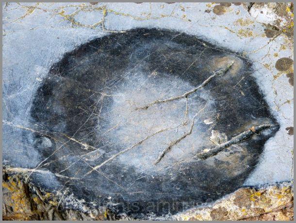Un cercle sur la pierre qui garde trace