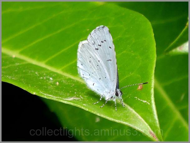 Bleu azur sur feuille