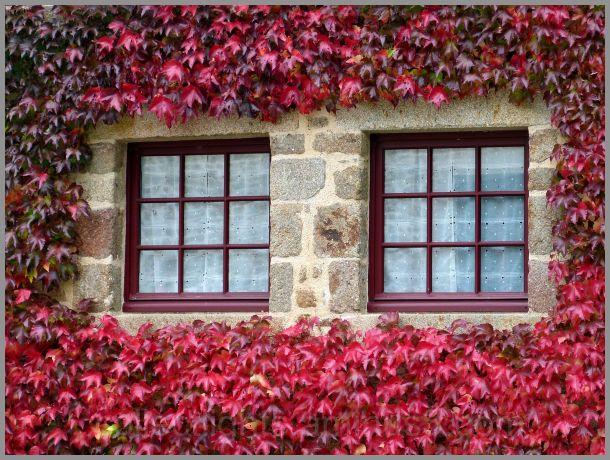 Rêver de fouler un tapis de feuilles d'automne
