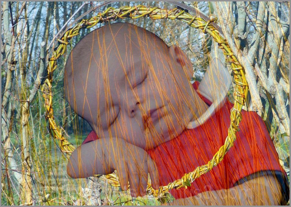 Il rêvait d'un berceau en osier