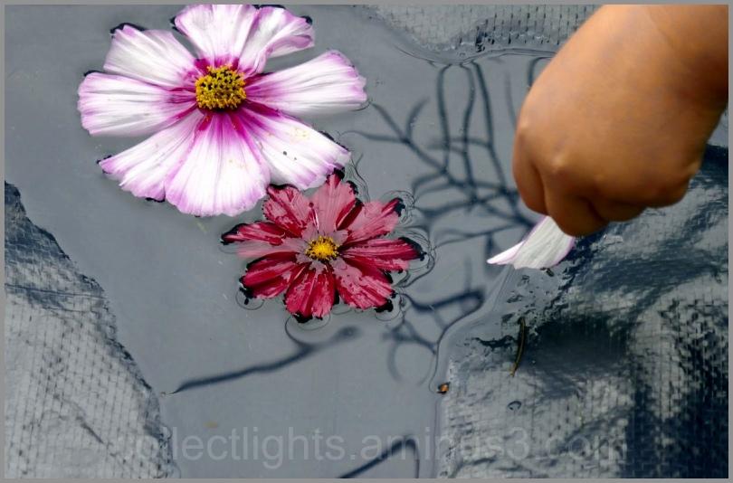 L'enfance et l'art floral au fil de l'eau