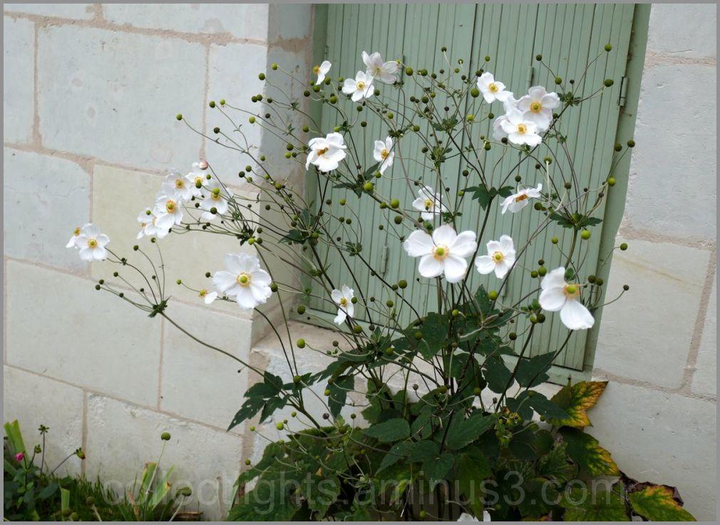 Bordure de trottoir fleurie