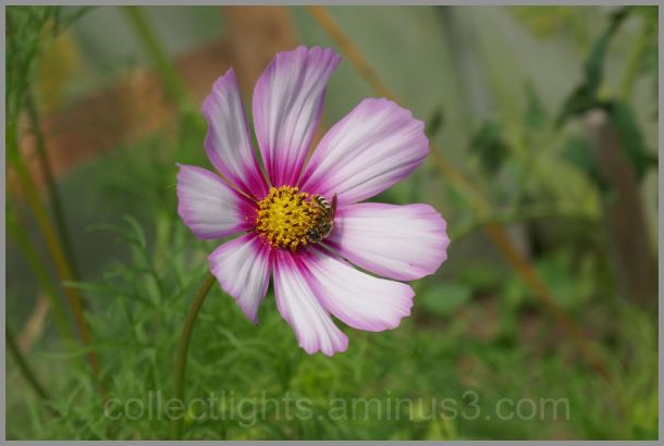 La fleur comme nid pour la guêpe