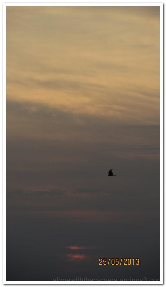 Loner going home...
