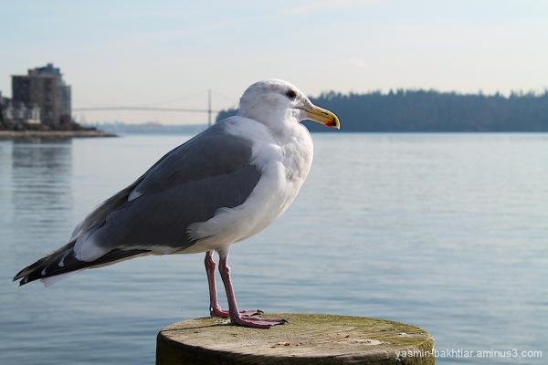 Marine bird's portrait :)