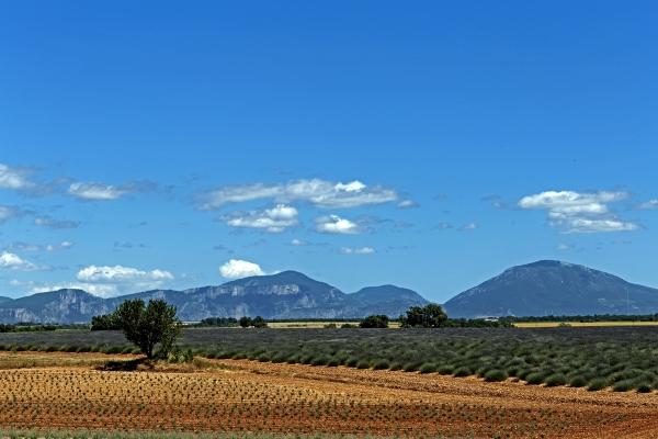 Les Hérissons de Provence
