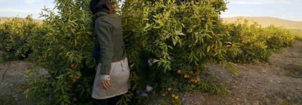 Orange Gorden