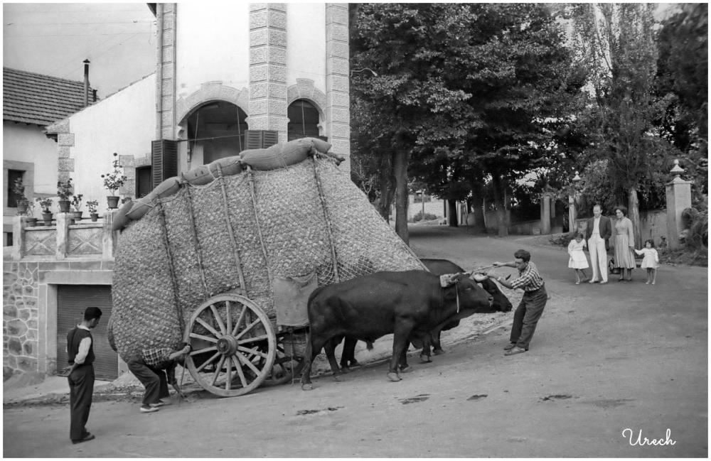 Oxcart on a street in Miraflores de la Sierra.