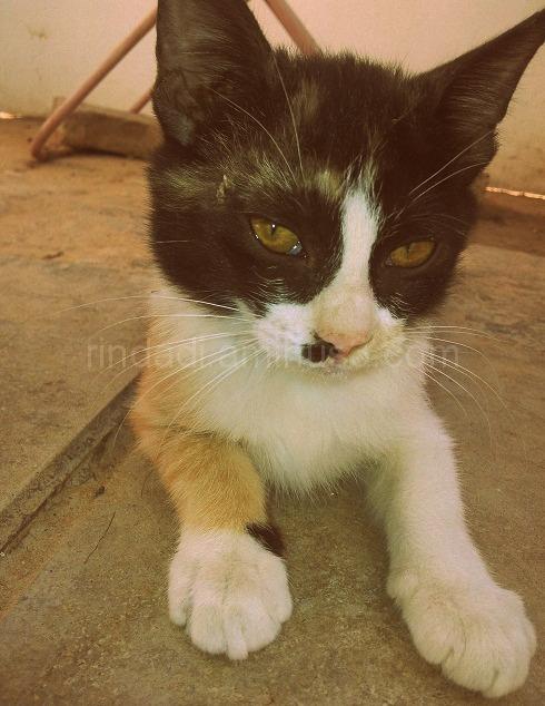 Lonely Kitten