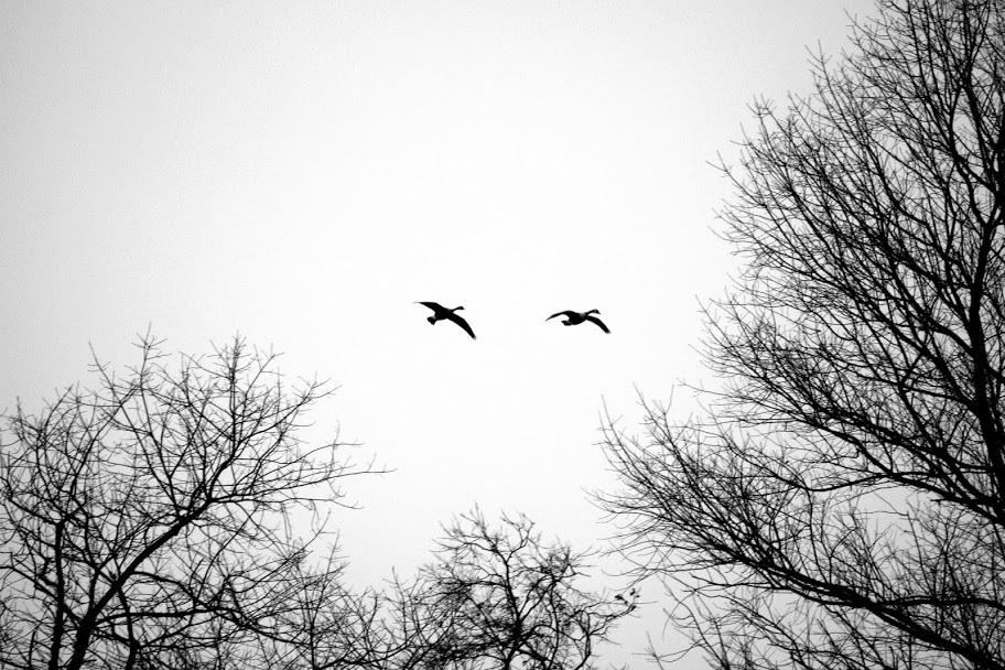 Beautiful birds on a gloomy day