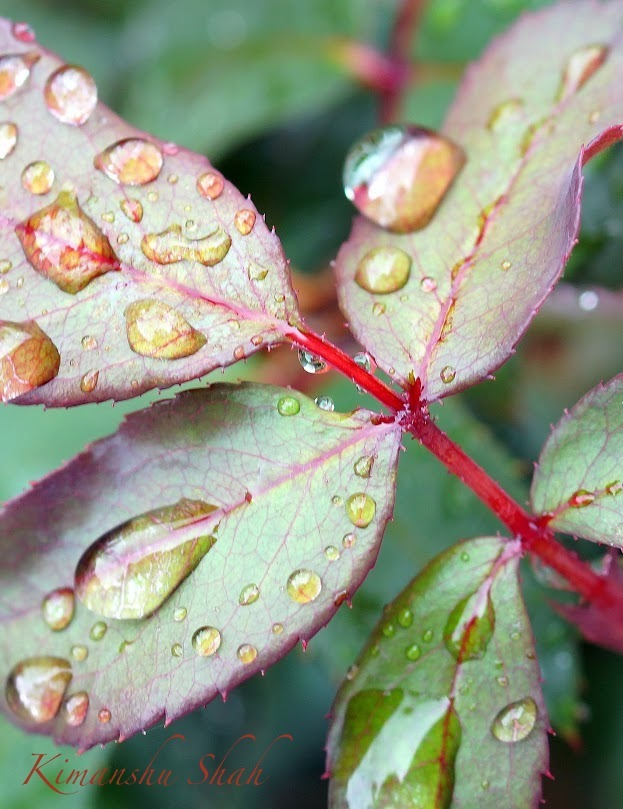 Lovely droplets on a leaf