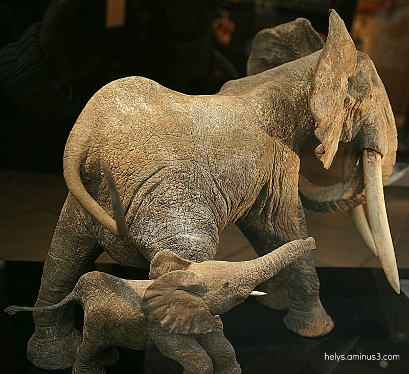 mom elephant