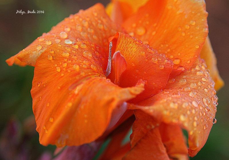 flower,orange,droplets,shapes,mada,helys,2014
