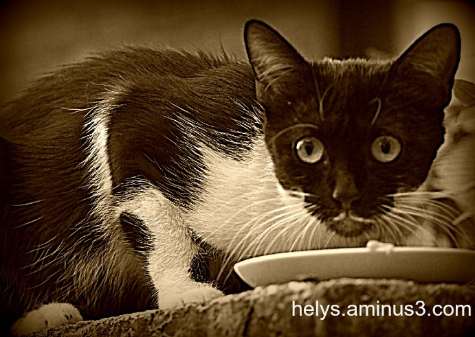 Kitty's eyes