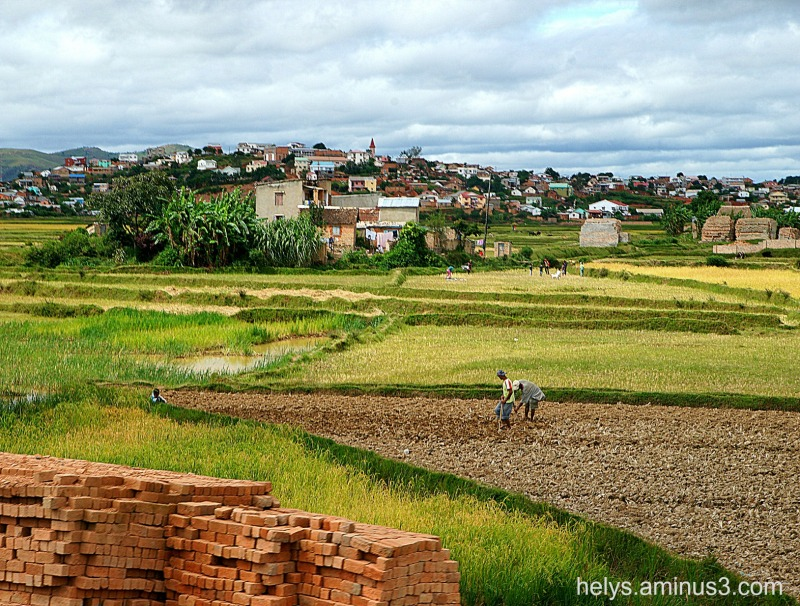 Antananarivo: ricelands