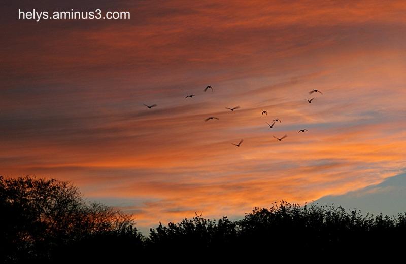 Birds go back home