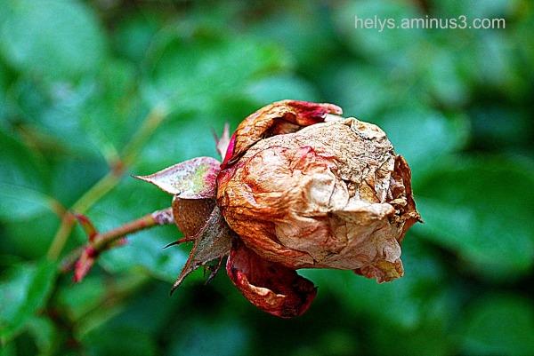 beauty is not gone!