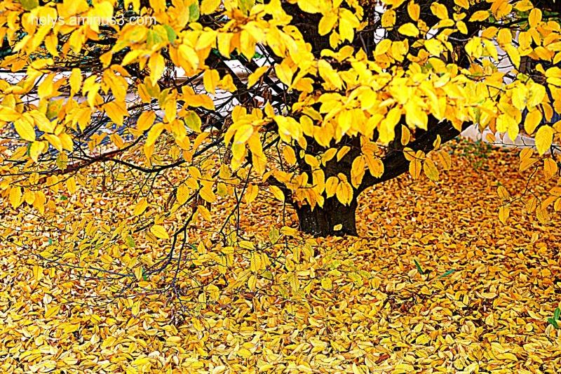 autumn golden colors