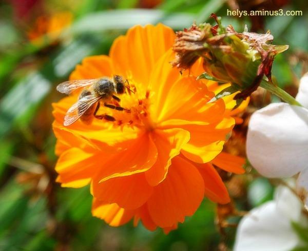 a sweet bee