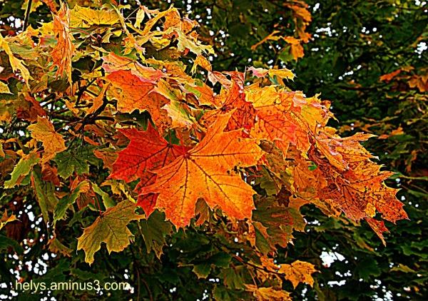 autumn colors2