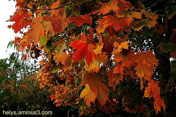 autumn colors3