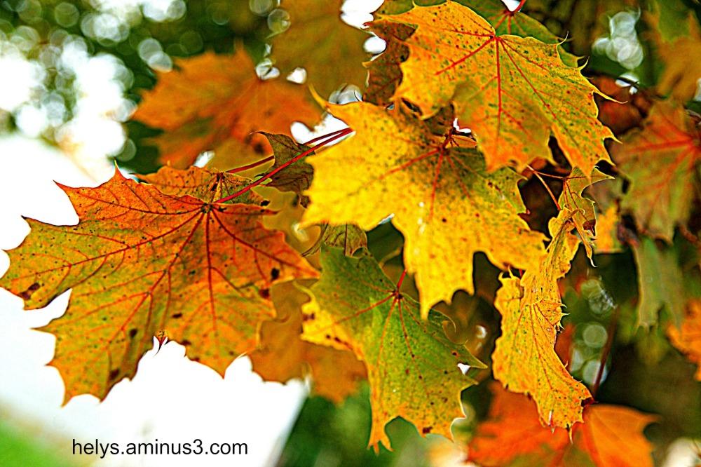 autumn colors6