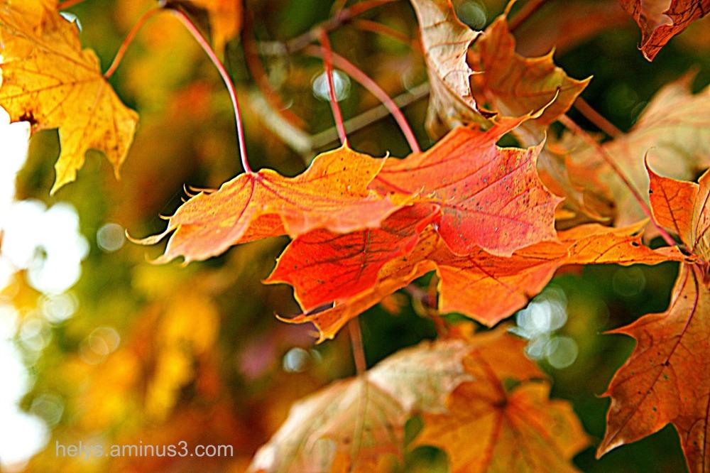 autumn8