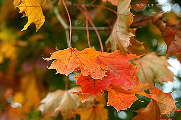 autumn colors9