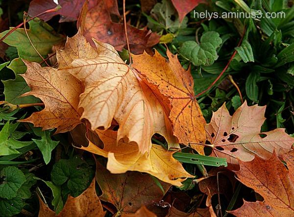 autumn colors10