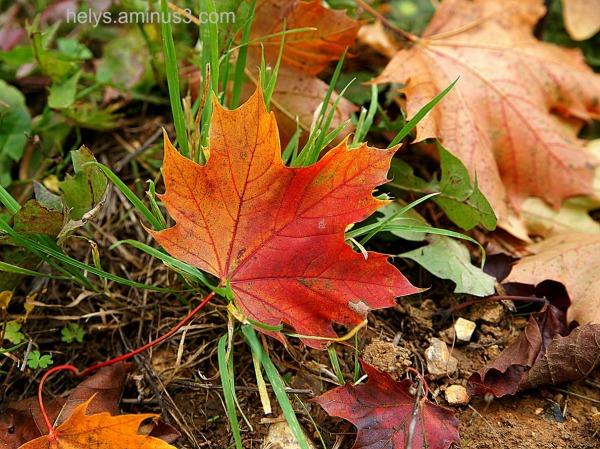 autumn colors12