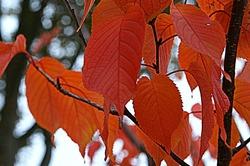 autumn colors2016/1