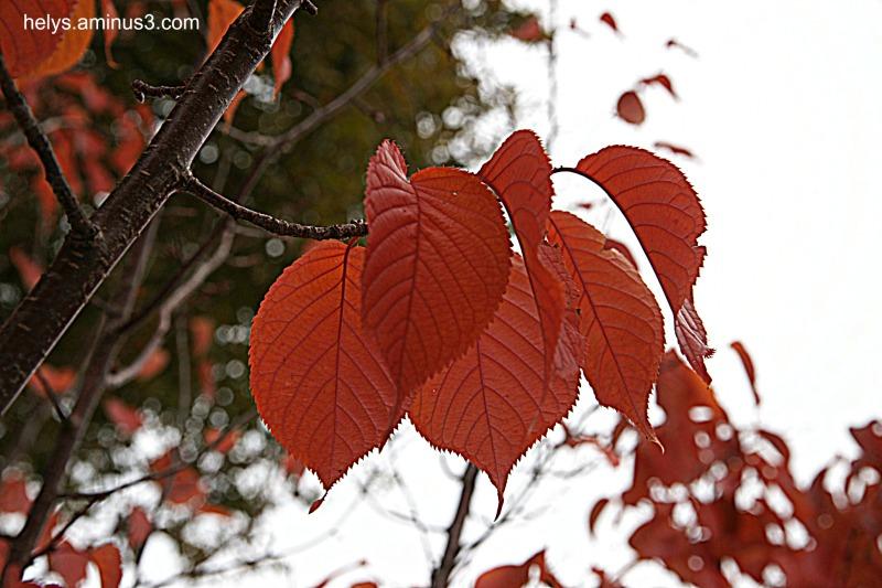 autumn colors2016/2